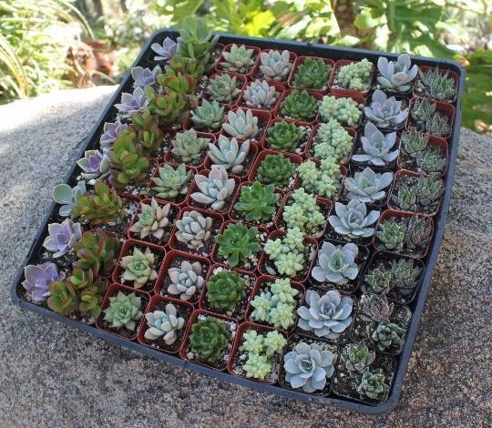 contemporary the succulent source discount