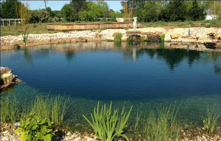 modern contemporary natural pools in texas